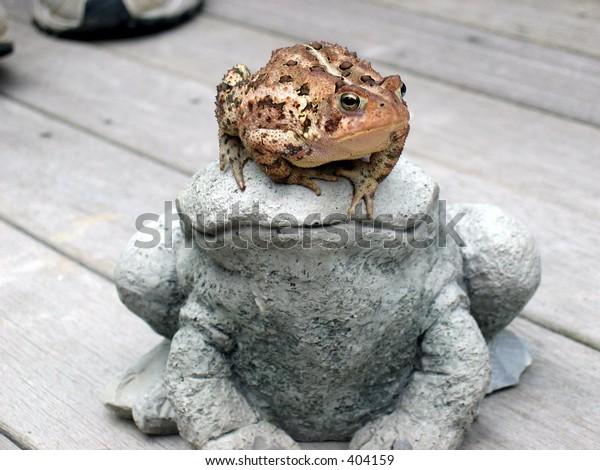 frog on stone frog