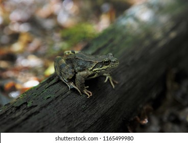 A frog on a trunk of tree in the shadow, mimicry