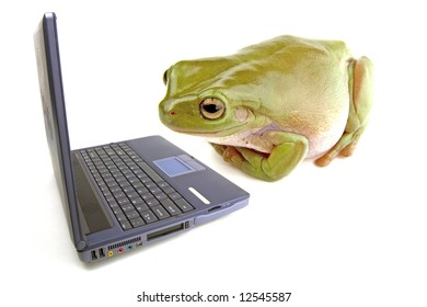 A frog on a white background looking at a computer