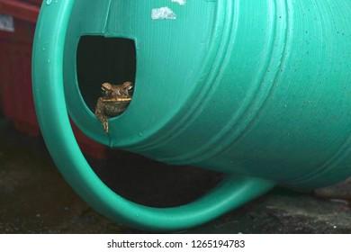 A frog peeking from inside my watering pot