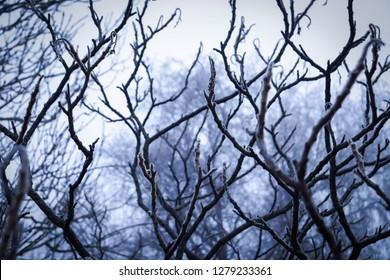 A frog perpective shot of a few trees