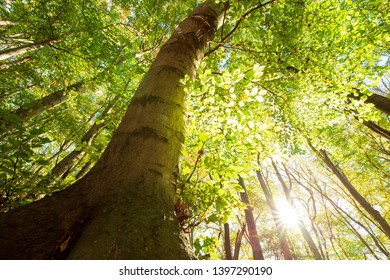 Frog perspective of a tree with green leaves and sunshine