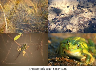 Frog Physiology