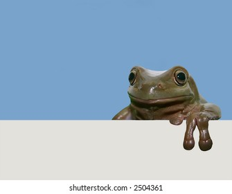 Frog with placard