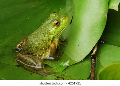Frog Profile