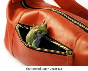 Frog in Purse Pocket