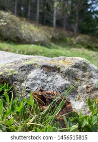 Frog in the Pyrenees landscape in France