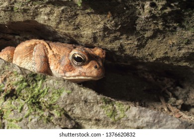 Frog in rockface