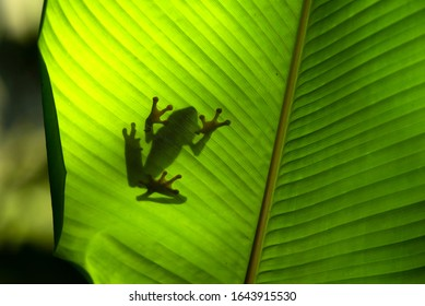 Frog silhouette on green leaf