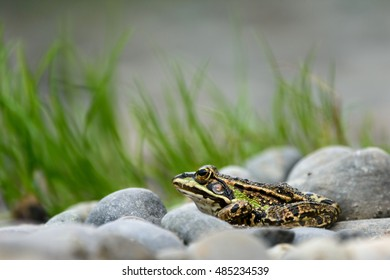 A frog sits by the pond.