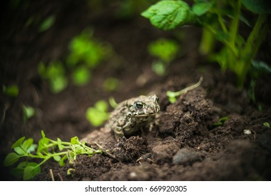 The frog sits in the grass nature