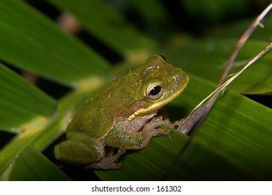 frog sitting