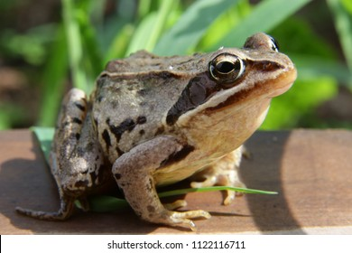 Royalty-Free Tailles Amphibians Stock Images, Photos & Vectors ...