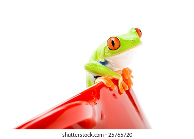 frog sitting on a pot isolated on white