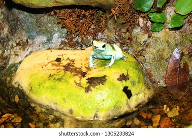 A frog sitting on a rock