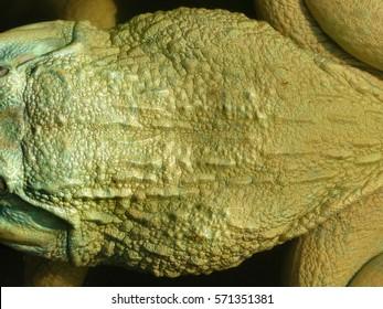 frog skin closeup