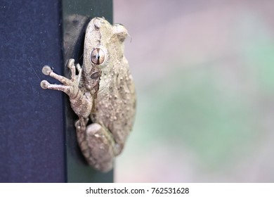 Frog toad clinging to a black aluminum fence post in the woods with trees and greenery in the background.