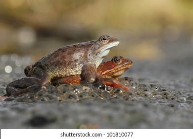 Frogs in eggs