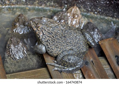 Frogs are primary predators and an important part of the food web.