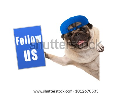 frolic pug puppy dog with cap, holding up blue follow us sign, hanging sideways from white banner, isolated