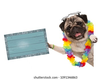 frolic summer pug dog with hawaiian flower garland and sunglasses, holding up blue vintage wooden board, isolated on white background