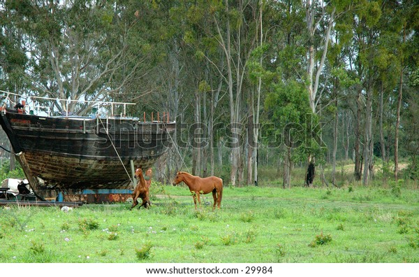 Frolicking horses 3