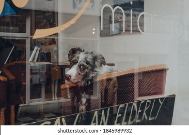 Frome, UK - October 05, 2020: Dog on a chair inside a pub in Frome, a small market town in the county of Somerset, UK, view through the window. Reflection of the street in the glass, selective focus.