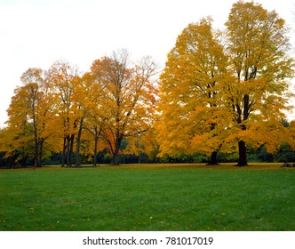 In front of grass in the autumn park, there are yellow-red trees that look great.