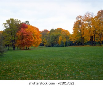 In front of grass in the autumn park, there are green, yellow and red trees that look great.
