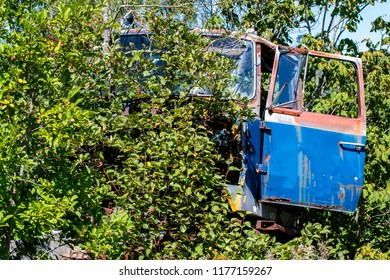The front of an old abandoned truck. Trees are growing from and around the truck, but a blue door is visible. Truck is not identifiable.