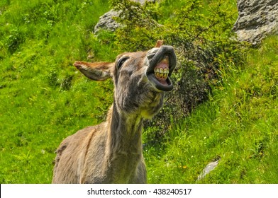 Front portrait of a funny smiling brow donkey in the sun with green nature background