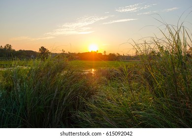 a front selective focus picture of grass field in the evening sunset