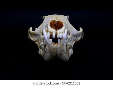 Skull Back Images, Stock Photos & Vectors | Shutterstock