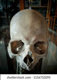 front side of a human skull fully empty human skull skull of men