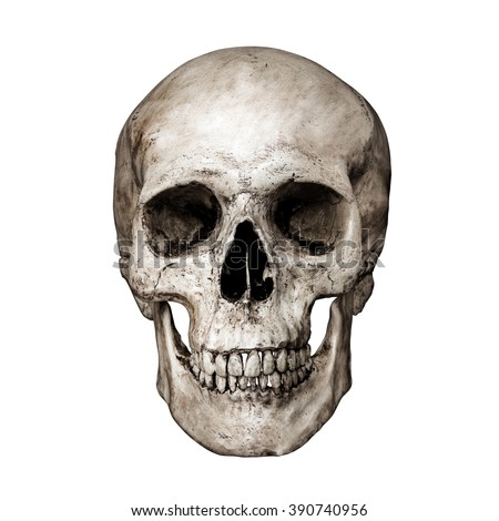 front side view human skull on の写真素材 今すぐ編集 390740956