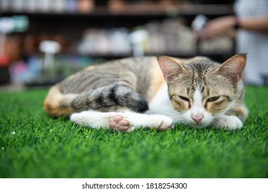 Front view of a cute cat sleeping and relax on the lawn