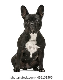 Front view of a French Bulldog sitting isolated on white