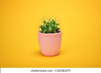 Front view Green Cactus concept on yellow background with copy space. Aloe and other succulents in colorful ceramic pot.