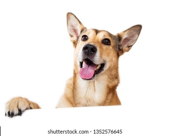 Front view at happy charismatic happy dog sitting, looking aside, isolated on white