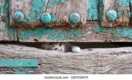 Front view of kitty head and leg through old wooden door hole