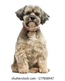 Front view of a Lhasa apso sitting, looking at the camera, isolated on white