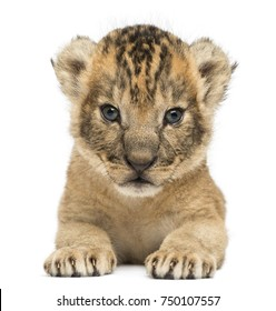 Front view of a Lion cub lying, looking at the camera, 16 days old, isolated on white