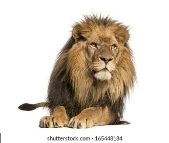 Front view of a Lion lying, Panthera Leo, 10 years old, isolated on white