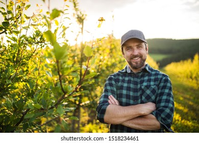 A front view of mature farmer standing in orchard at sunset. Copy space.