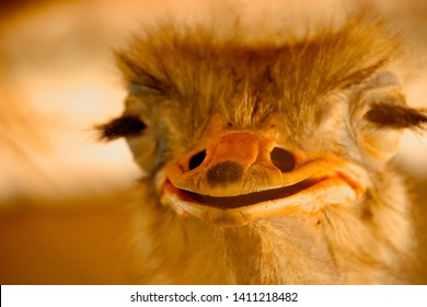 Front view of an ostritch making it look like it is smiling wildly