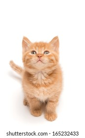 Front view of red kitten sitting on the studio floor looking up at blank copy space