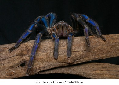 Front view of Spider with tarantula