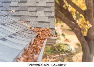 Front yard clogged gutter near roof shingles of residential house full of dried leaves and dirty need to clean-up. Blocked drain pipe on rooftop. Gutter cleaning and home maintenance concept