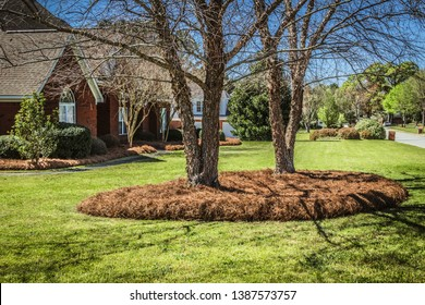 Front yard lawn with trees in pine straw bed