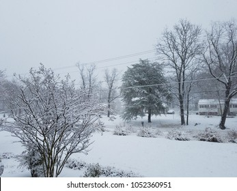 front yard with snow and grasses and trees